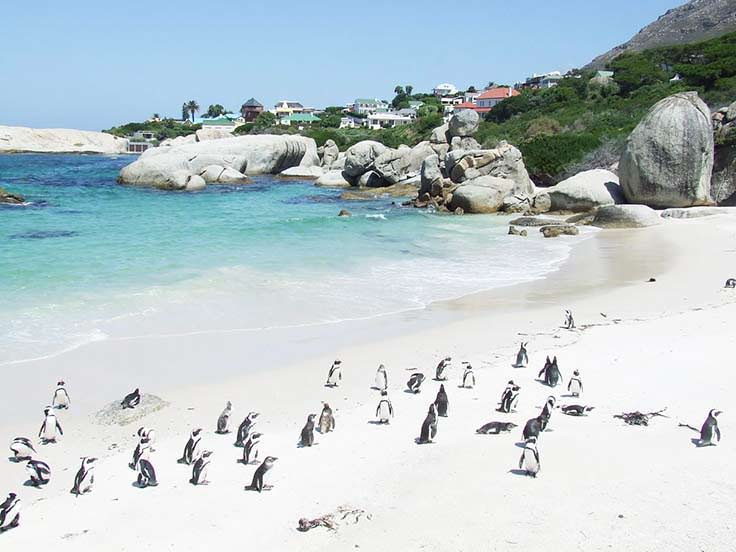Boulders-Beach-Simons-Town-South-Africa-Penguins