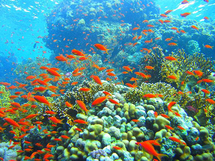 Coral-Reef-in-Ras-Muhammad-Nature-Park
