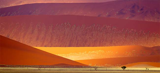 The famous red dunes in Namib-Nankluft Park one of the biggest parks in Africa
